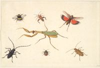 Seven Insects