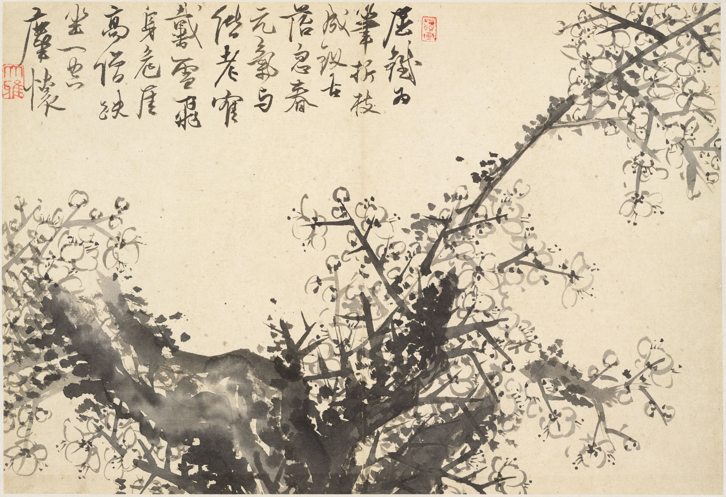 Old Weathered Plum Tree With Spring Blossoms And A Poem