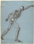 Study of the Borghese Gladiator as a Skeleton
