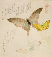 One Large And Four Small Butterflies With Text Beginning
