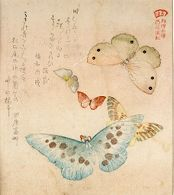 One Large, Two Medium-Sized and Two Small Butterflies with text beginning