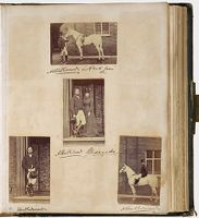 Untitled (Four Photographs, Albert Edward And Alexandra,