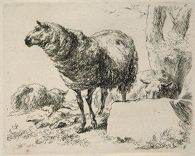 Two Sheep: One Standing, One Lying Behind a Rock