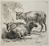 Three Sheep: One Standing To Right Of Two Lying Down