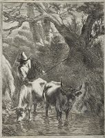 Herdsman Driving Two Cows Through A Brook