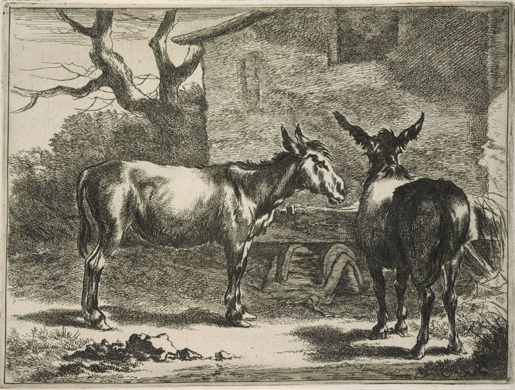 Two Donkeys At A Trough