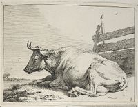 The Cow Lying Down Near A Fence
