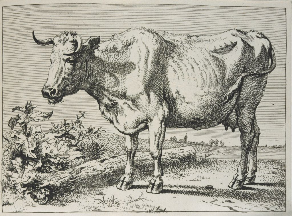 The Cow With The Crumpled Horn