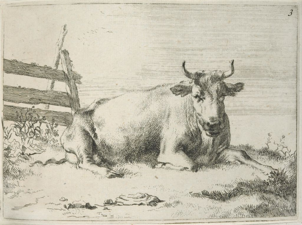 Recumbent Cow Near A Fence