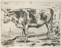 Standing Steer, Facing Left