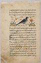 Peacock (Painting, Verso); Bird (Painting, Recto), Illustrated Folio From Nuzhat' Namah-I Alai Of Shahmardan Ibn Abi Al-Khayr
