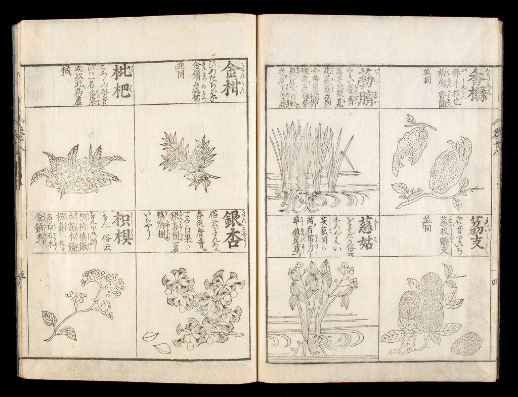 An Illustrated Encyclopedia (Kinmō Zui)