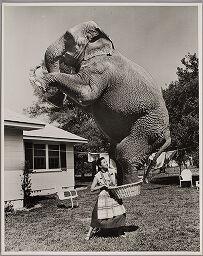 Untitled (Woman Balancing Elephant In Laundry Basket)