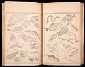 Hokusai Manga (Hokusai Sketchbooks), Vol. 1