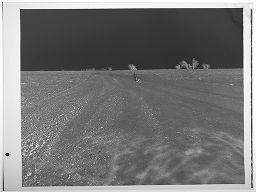 Untitled (Man And Dog In Wide Open Field)