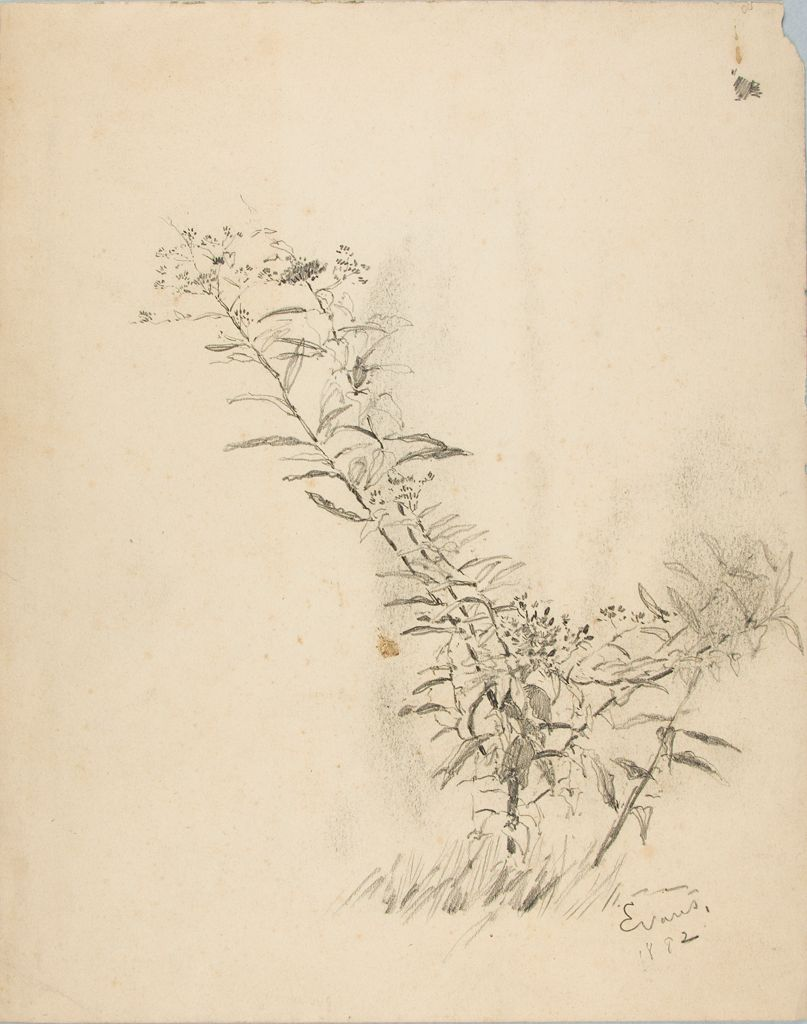 Sketch Of A Plant With Flowers