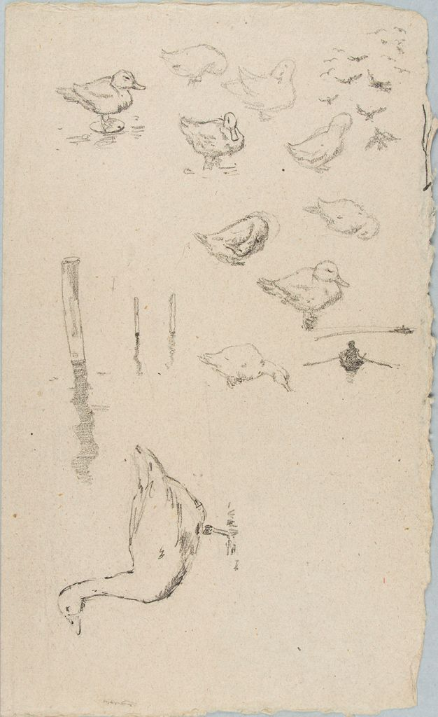 Sketches Of Ducks And A Goose