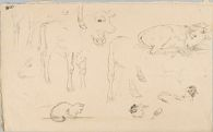 Sketches of Animals