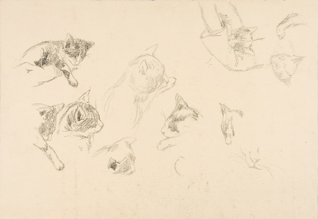 Studies Of Cats