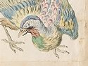 Hunched Bird With Ruffled Feathers; Verso: Blank