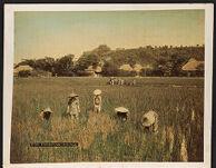Work 17 of 27 Title: Transplanting rice Creator: Tamamura, Kozaburo Date: ca. 1888