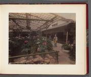 Work 14 of 26 Title: Peony, Mankayen Garden Date: 188-?