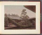 Work 10 of 26 Title: Spruce tree on Kinkakuji, Kioto Creator: Attributed to Kusakabe, Kimbei Date: ca. 1890