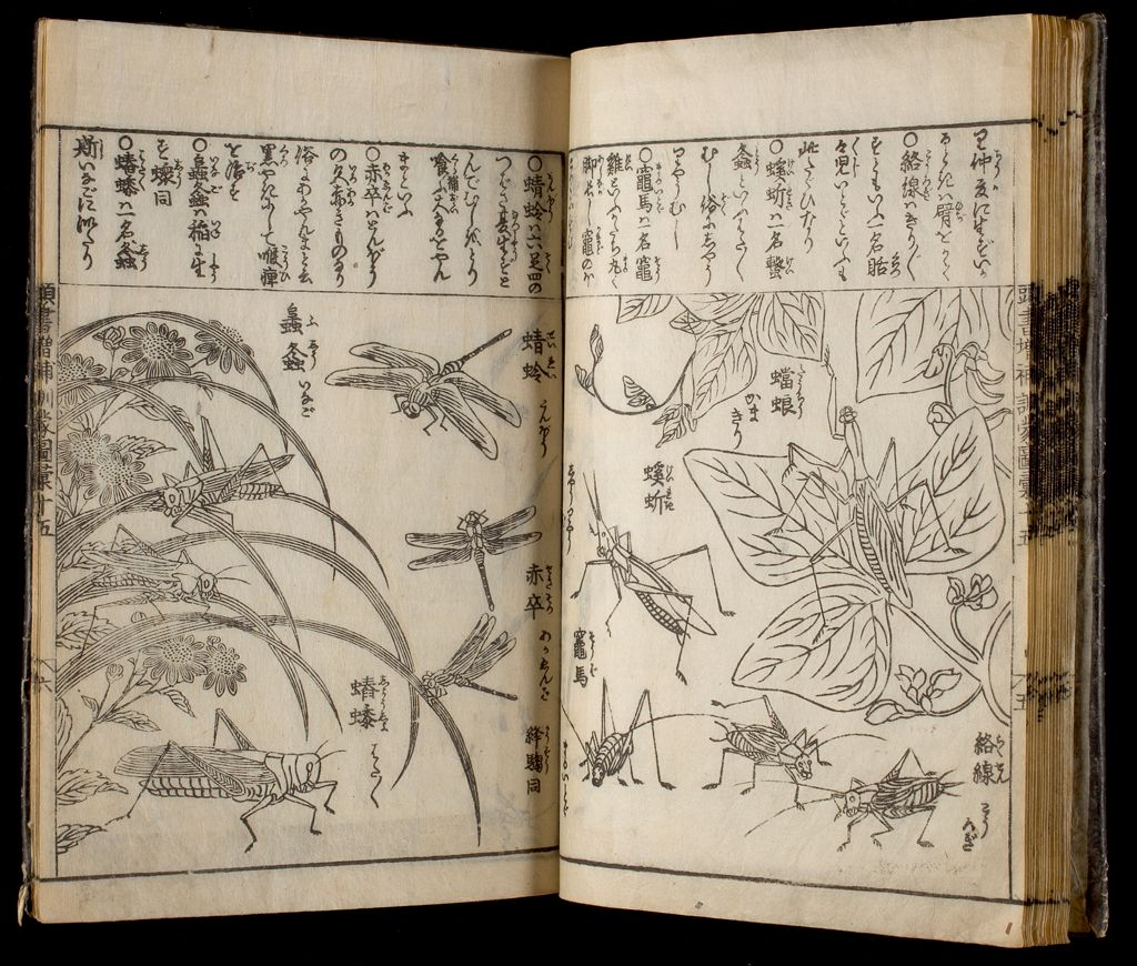 Great Illustrated Encyclopedia, Revised And Enlarged (Sōbo Tōsho Kinmō Zui Taisei), Vol. 7