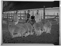 Untitled (three men and a boy standing with hogs in a corral)