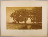 Landscape, Remarque: Pansies