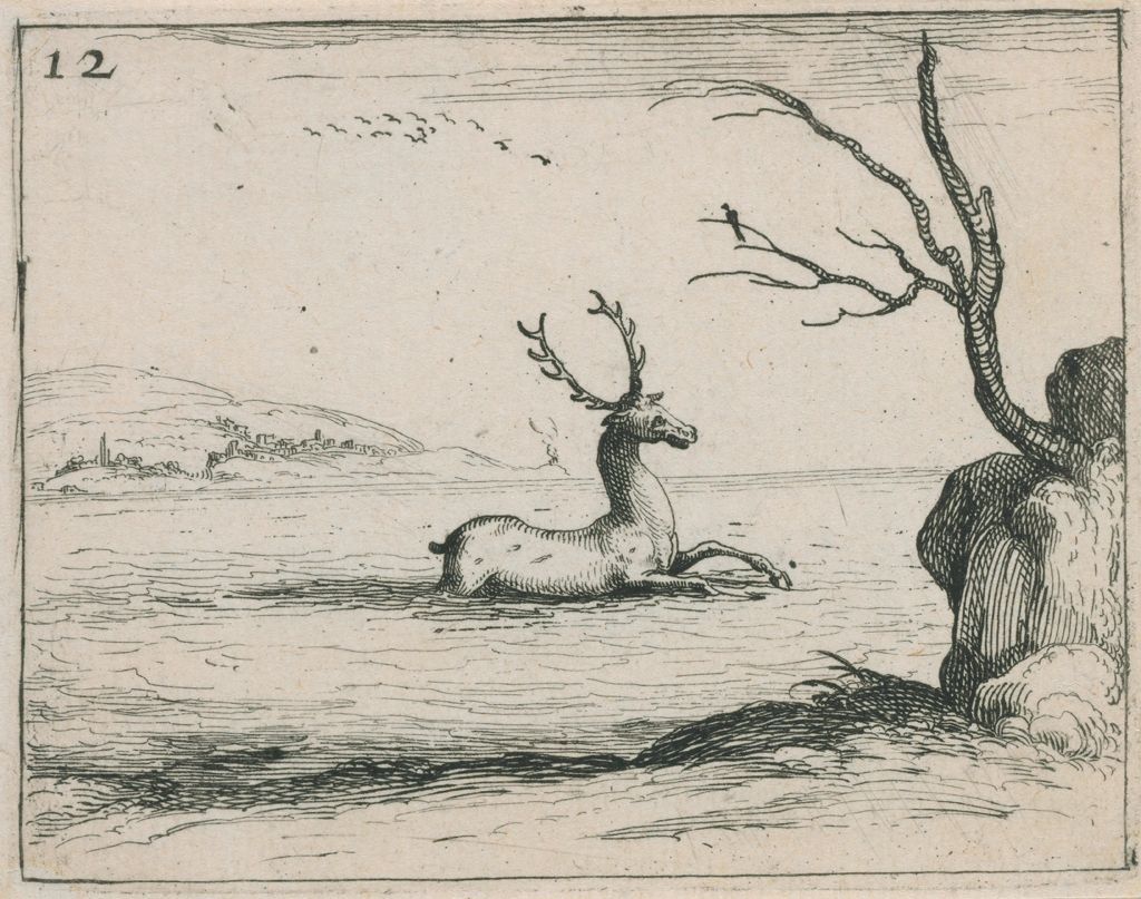 Stag In The Water