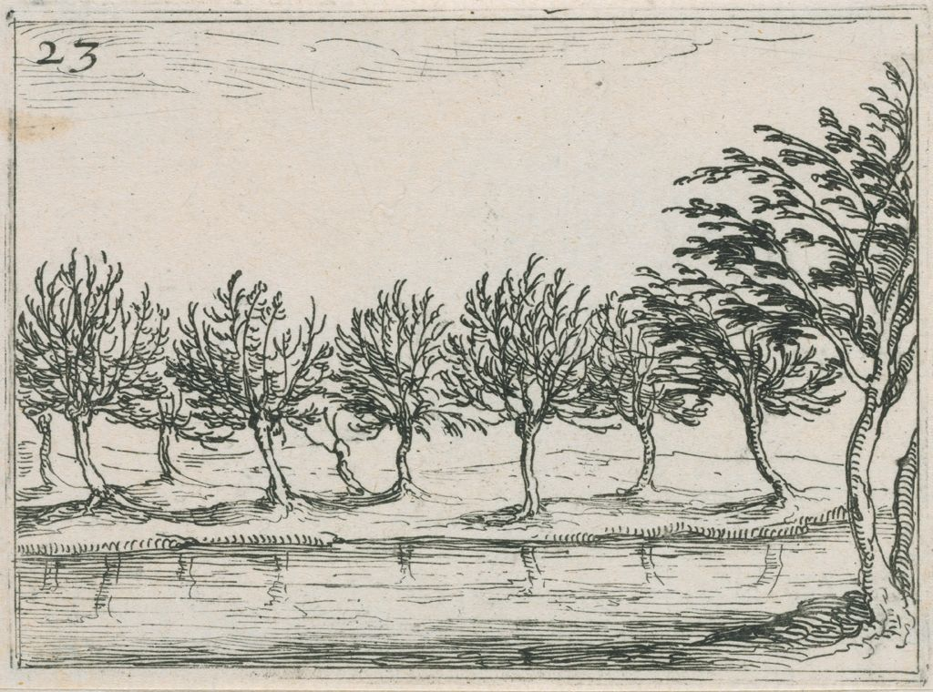 Willows At The Water's Edge
