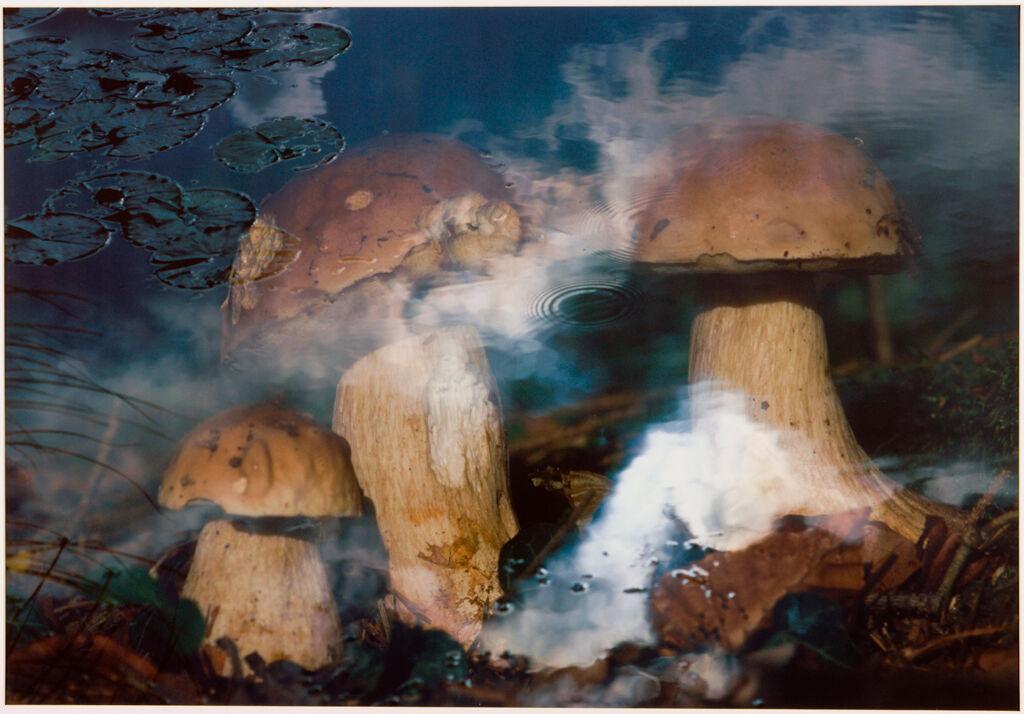 Pilze In Wasser [Mushroom In Water]