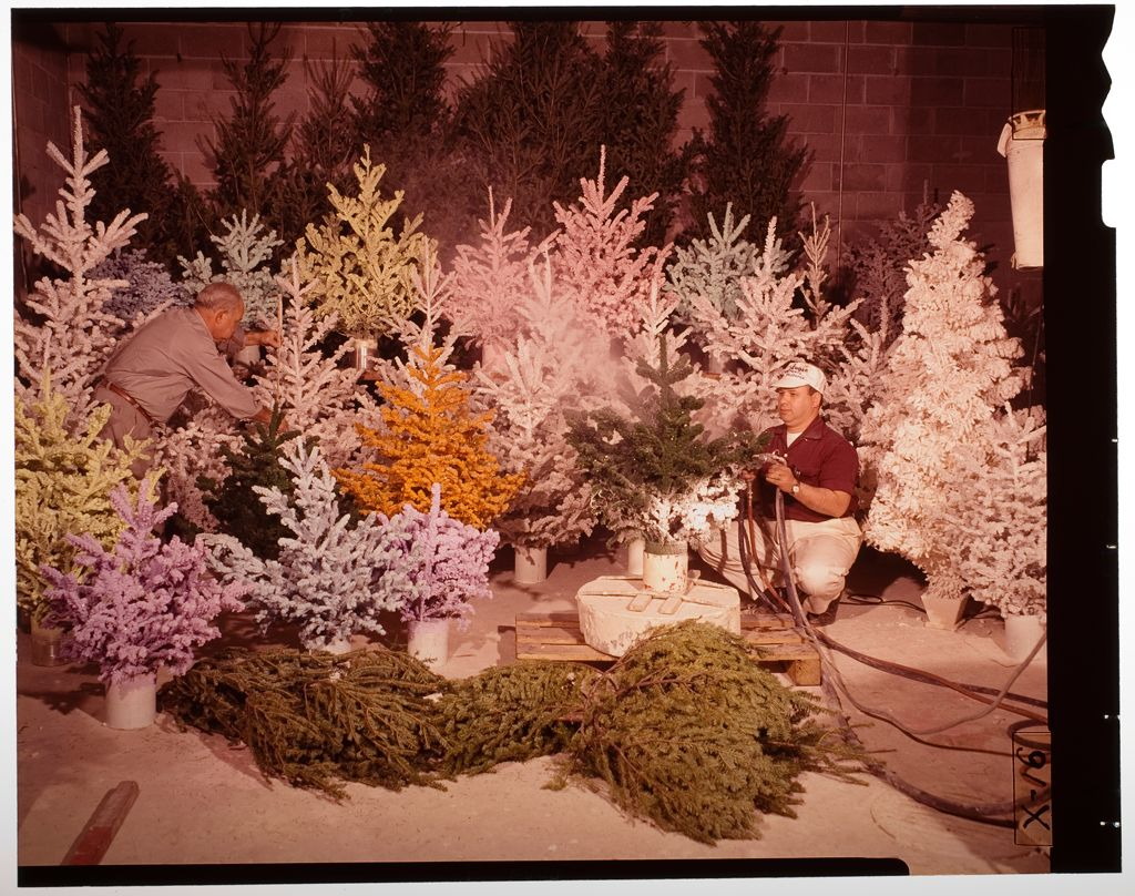 Untitled (Men Spraying Fake Snow Onto Christmas Trees)