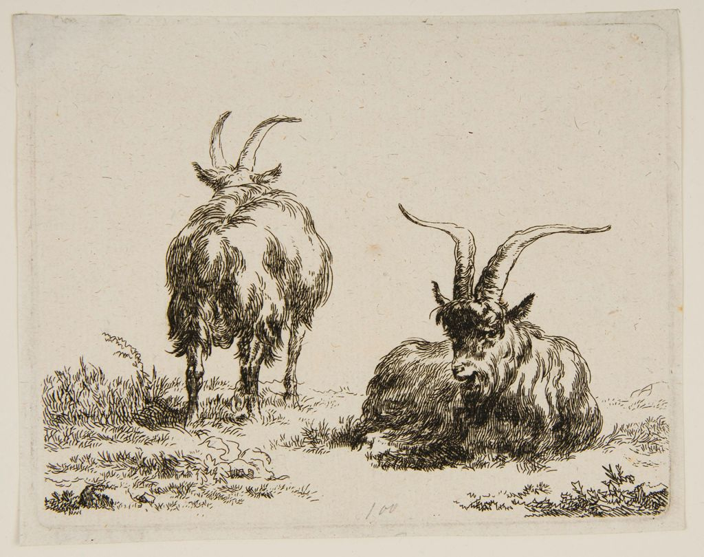 Two Goats,  One Lying Down In The Foreground