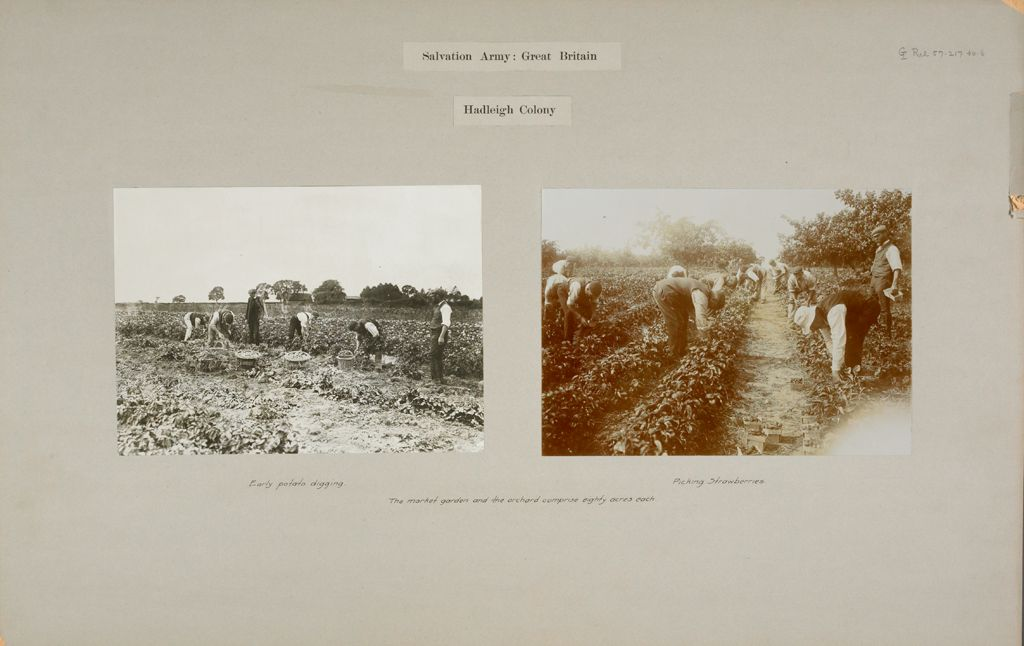 Religious Agencies, Salvation Army: Great Britain, England. Hadleigh. Salvation Army Labor Colony: Salvation Army: Great Britain. Hadleigh Colony: The Market Garden And The Orchard Comprise Eighty Acres Each.