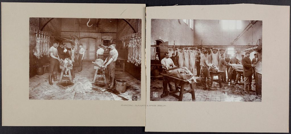 Health, General: Germany. Berlin. Municipal Slaughter House
