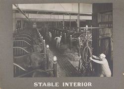 Industrial Problems, Welfare Work: United States. Pennsylvania. Philadelphia. H. J. Heinz Company: Stable Interior.   Social Museum Collection