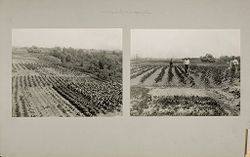 Miscellaneous: Training in Scientific Agriculture.   Social Museum Collection