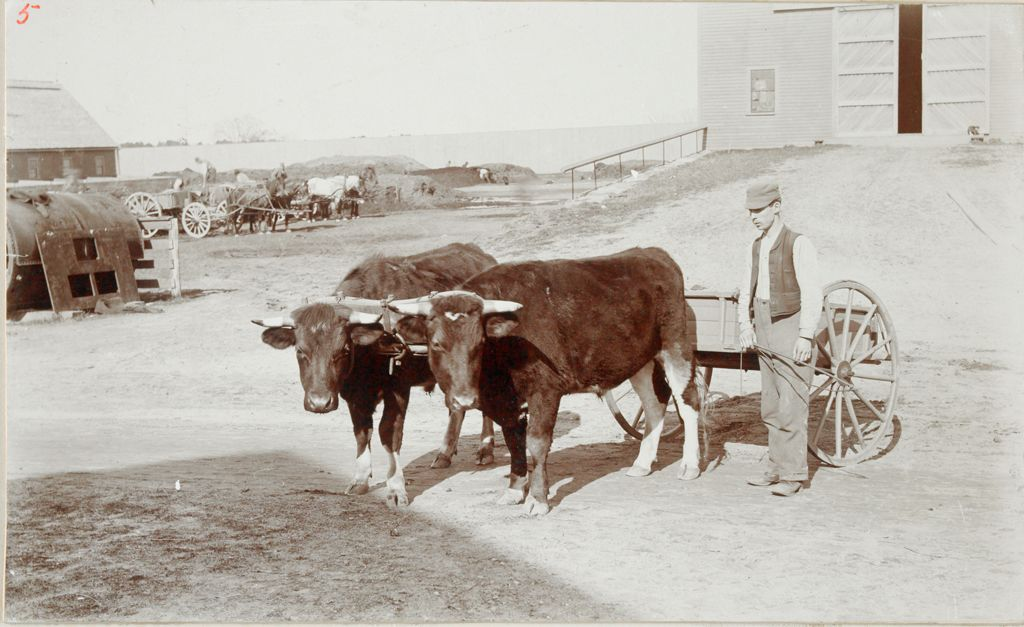 Charity, Public: United States. Massachusetts. Bridgewater. State Farm: State Farm. Pet Steers