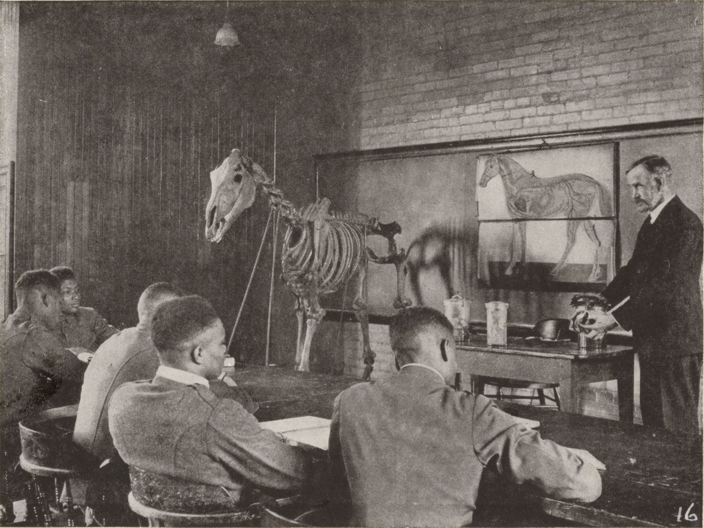 Races, Negroes: United States. Virginia. Hampton. Hampton Normal And Industrial School: Training In Scientific Agriculture: Agricultural Class At Hampton Institute Studying The Anatomy Of The Horse