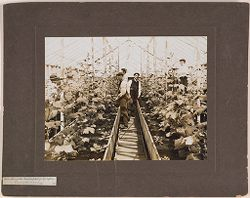Defectives, Epileptics: United States. Massachusetts. Palmer. State Hospital for Epileptics: Industries at the Mass. Hospital for Epileptics. Cucumber raising..   Social Museum Collection