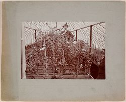Defectives, Epileptics: United States. Massachusetts. Palmer. State Hospital for Epileptics: Greenhouse..   Social Museum Collection