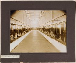 Defectives, Epileptics: United States. Massachusetts. Palmer. State Hospital for Epileptics: Industries at the Mass. Hospital for Epileptics. Cow barn. 4..   Social Museum Collection