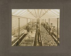 Defectives, Epileptics: United States. Massachusetts. Palmer. State Hospital for Epileptics: Interior of greenhouse, 1907..   Social Museum Collection
