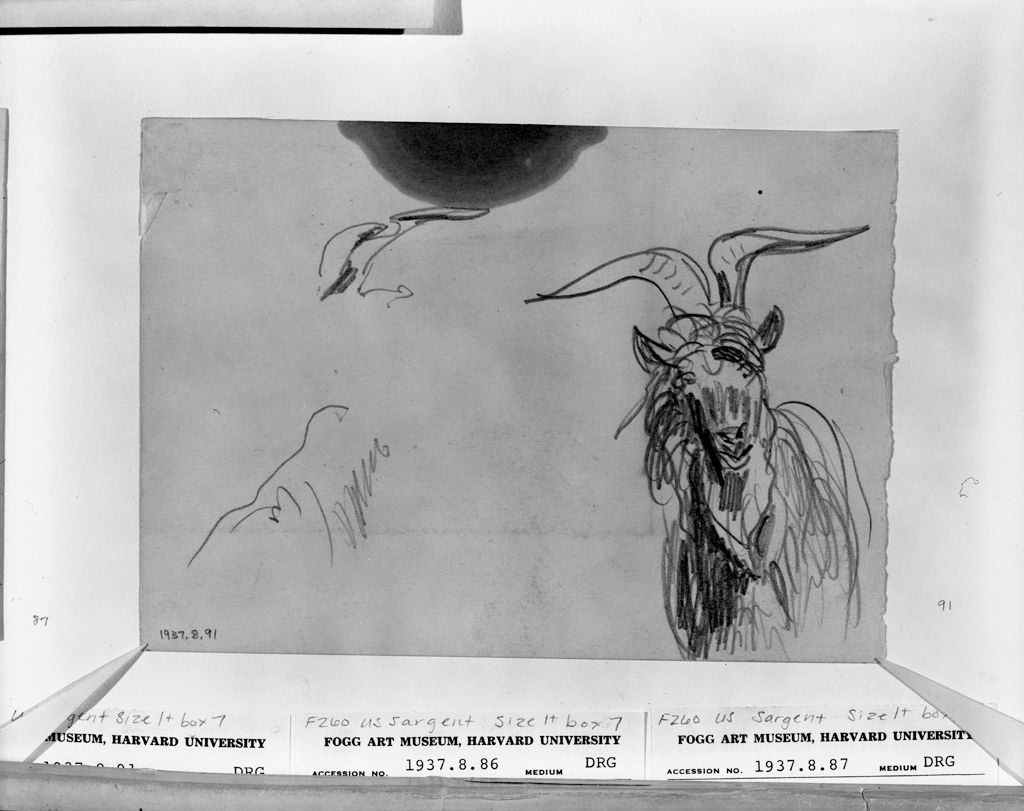 Sketches Of A Mountain Goat; Verso: Sketches Of A Mountain Goat