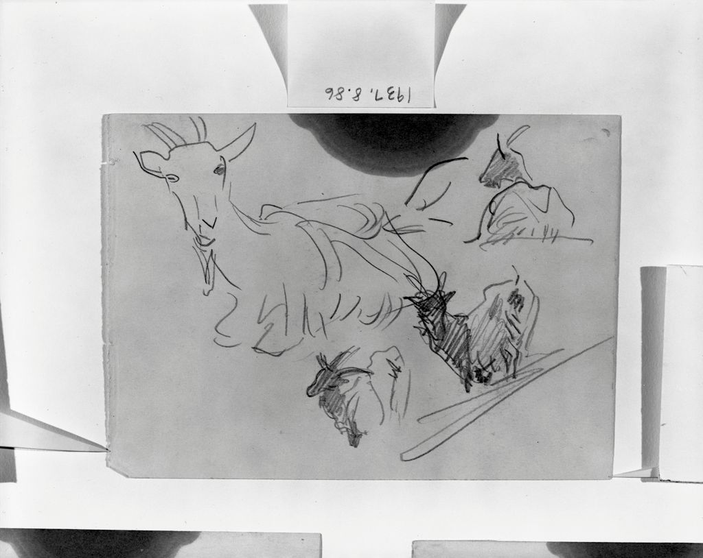 Four Sketches Of A Goat; Verso: Head Of A Cow