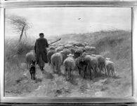 Shepherd and Sheep, Sand Dunes, Holland