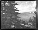 Spruce Tree And Cherry Mountain, New Hampshire