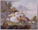 Shells and Sea Plants